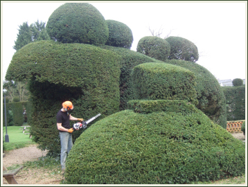 Hedge Reduction and Trimming image 2067556265