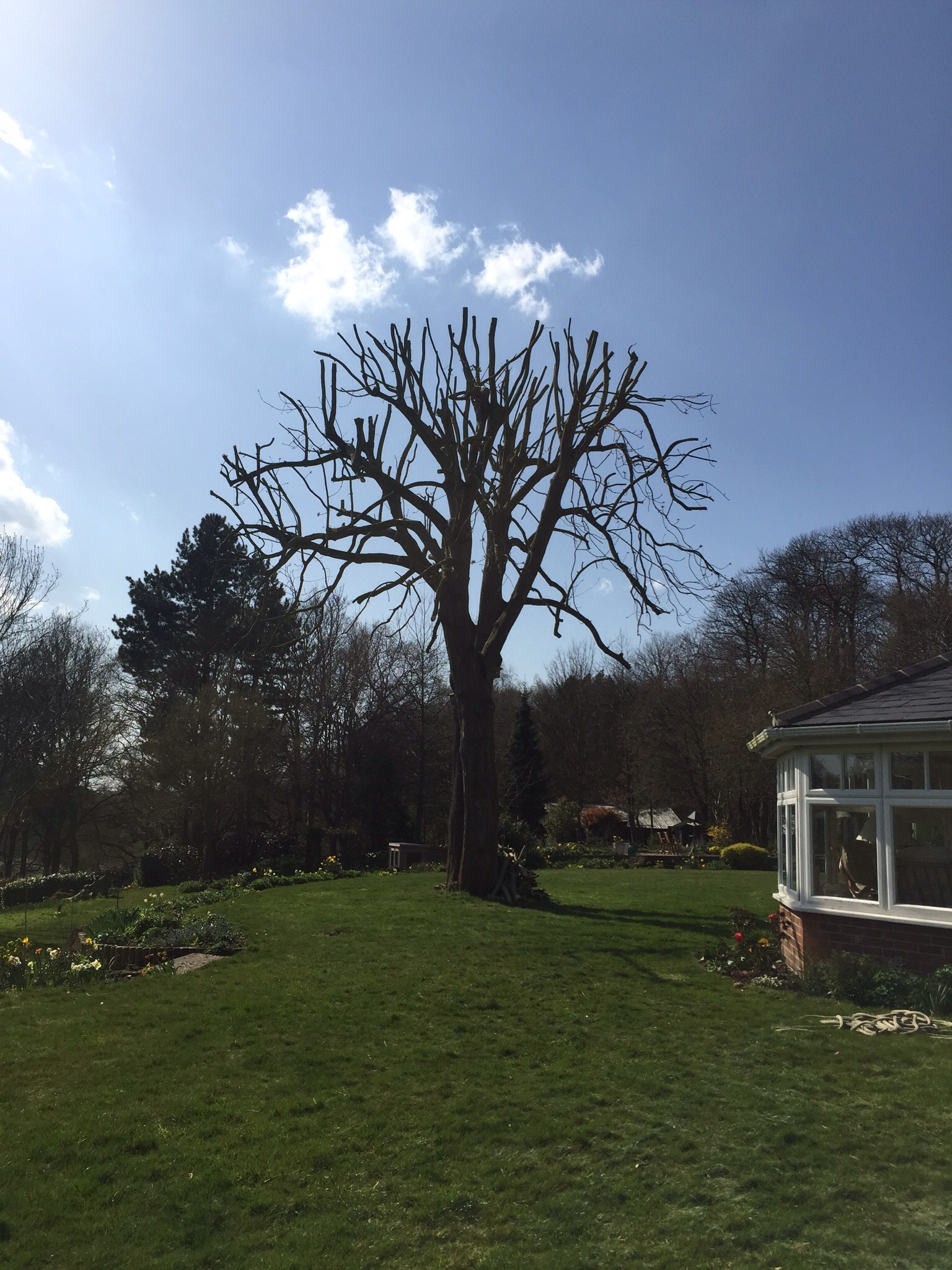 Tree surgery Langham Essex. Image