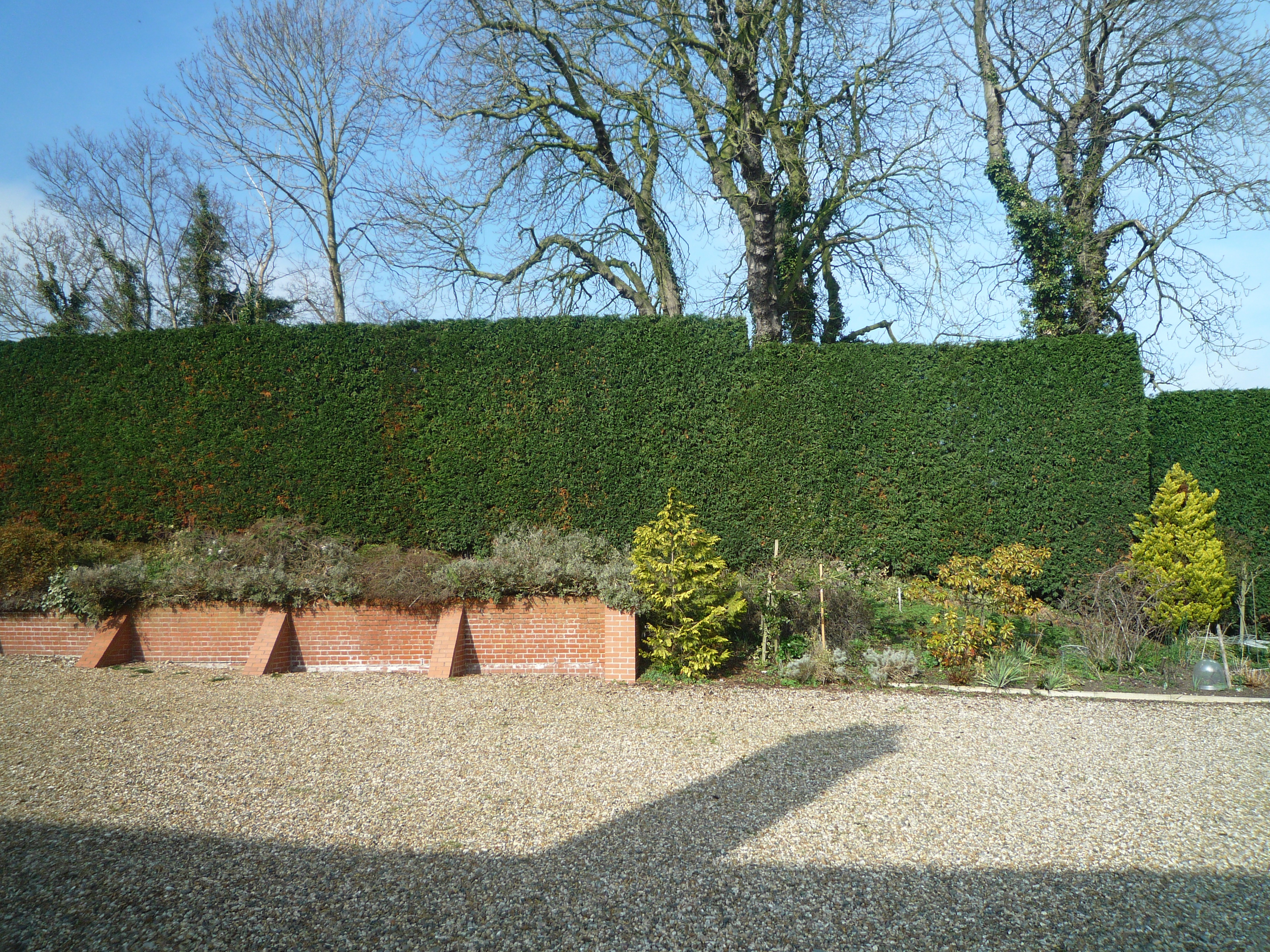 Hedge Reduction and Trimming image 2117770726