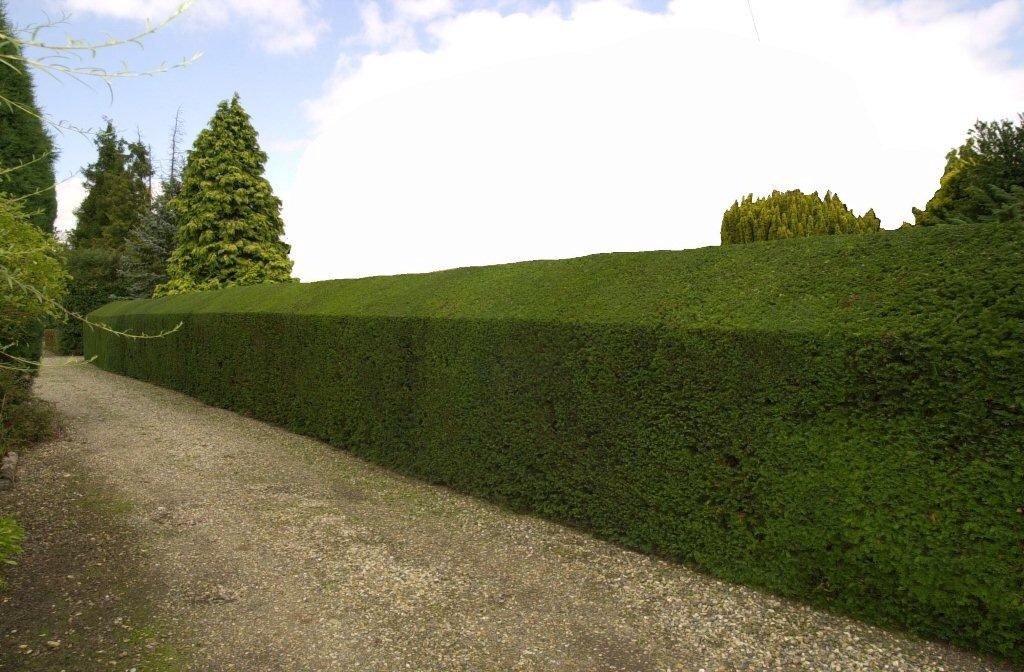 Hedge Reduction and Trimming