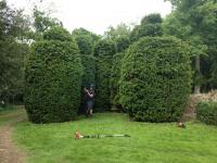 Hedge Reduction and Trimming image 32239812