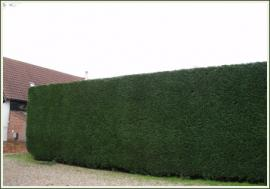 Hedge Reduction and Trimming image 260003414