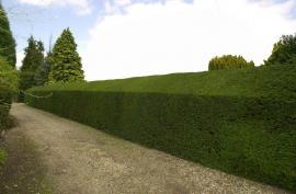 Hedge Reduction and Trimming image 190060172